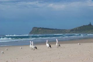Lennox_and_Pelicans